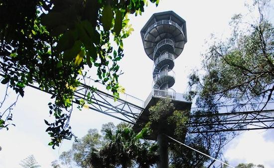 Illawarra Fly Treetop Walk, Австралия