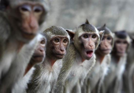 «Виртуальные обезьяны» на Amazon пытаются напечатать полное собрание сочинений Шекспира
