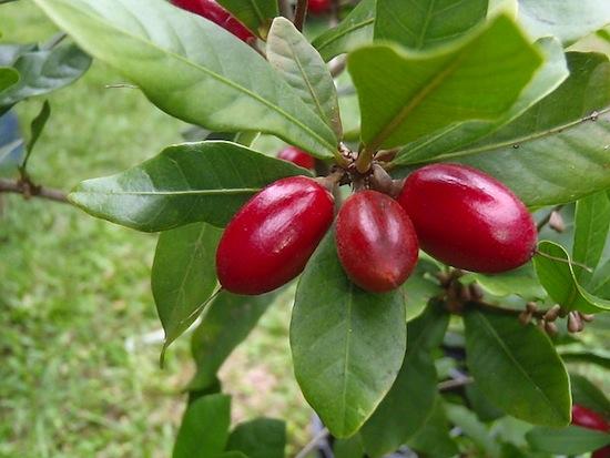 Магический фрукт