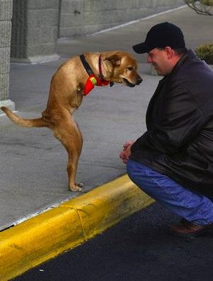 Собака-инвалид Вера ходит на задних ногах, как человек