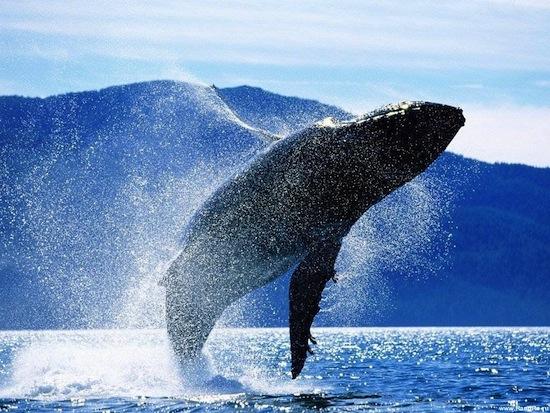 15 животных с экстраординарными качествами