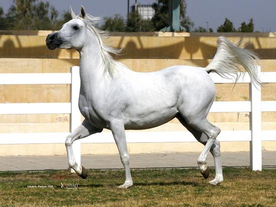 У лошадей не бывает рвоты