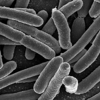 10 фактов о микроорганизмах