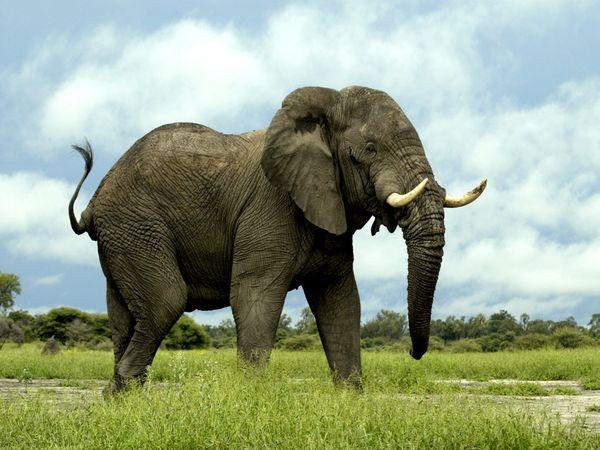 У слонов хорошая память