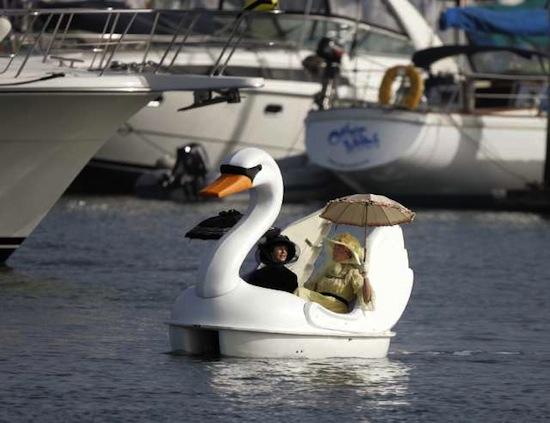 Лебеди могут влюбляться в катамараны