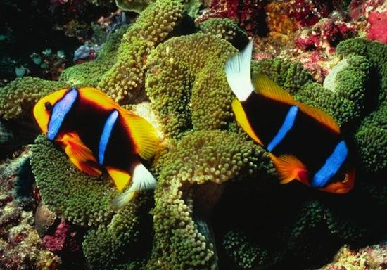 В воде с повышенным содержанием СО2 рыбы «пьянеют» и ведут себя глупо