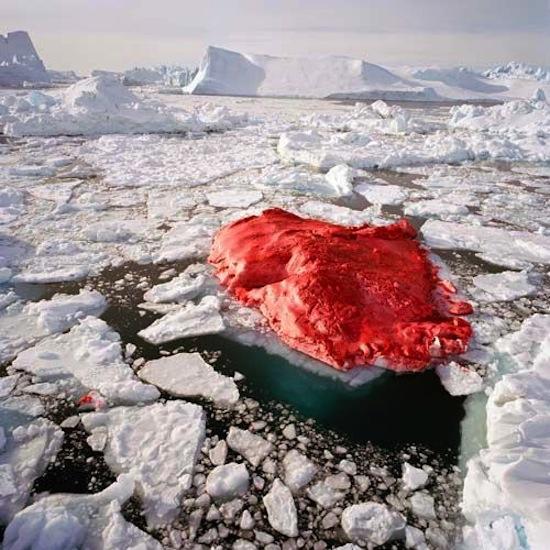 Возле Гренландии есть ярко-красный айсберг, покрашенный художником