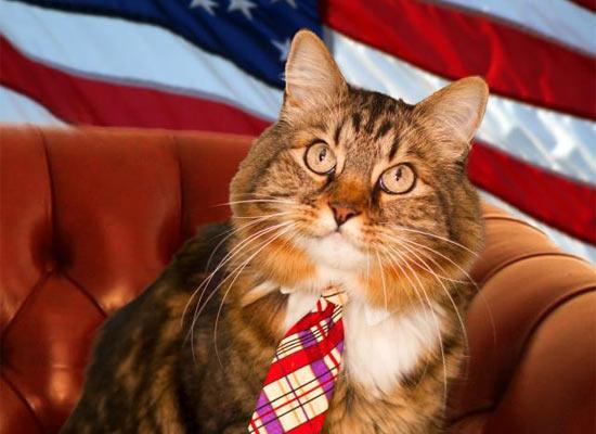 Кот Хэнк претендует на место американского сенатора