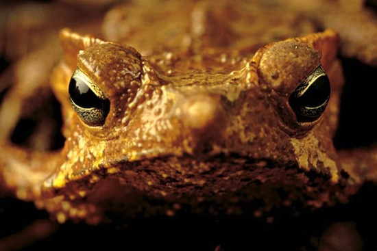 Si mantienes una rana o un sapo, entonces tendrás verrugas.