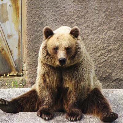 Ходить с пятки на носок могут только люди, медведи и человекообразные обезьяны