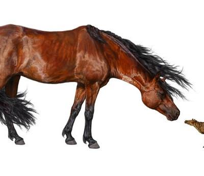 Древние лошади были размером с кошку