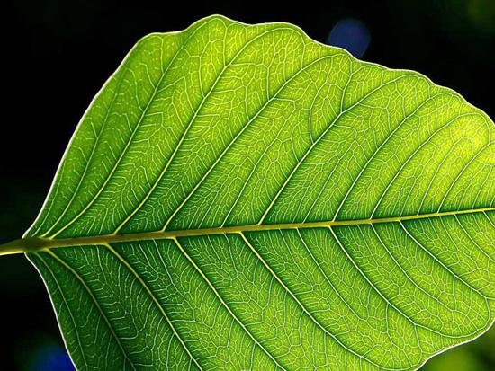 Растения-мутанты могут использоваться для борьбы с загрязнением почвы