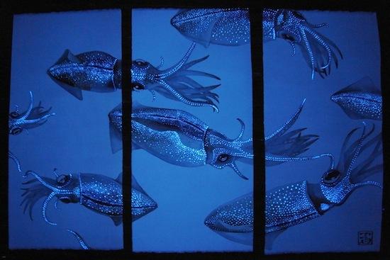 Существуют кальмары с ярко-голубой «подсветкой»