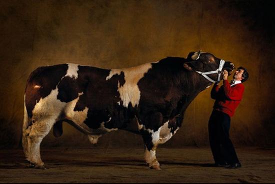 Существуют коровы-монстры
