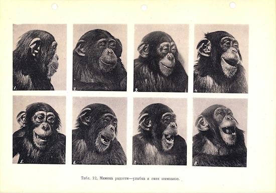 10 фактов о сходствах и различиях между человеком и шимпанзе