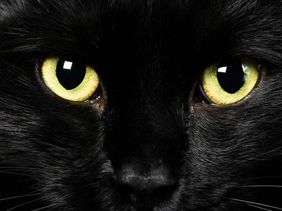 7 любопытных фактов о кошках