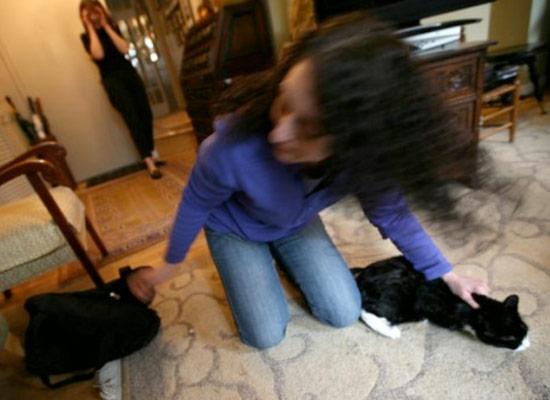 Существует профессия «выманиватель кошек»