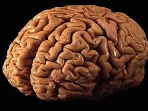 10 фактов об устройстве мозга