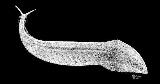 Среди предков человека был червяк