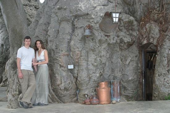 В ЮАР есть бар внутри растущего баобаба