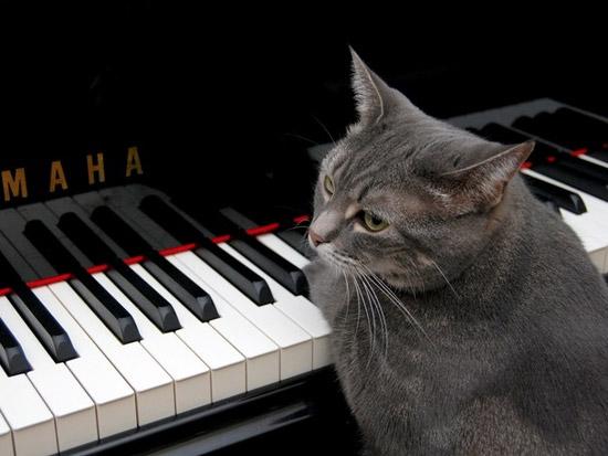 Кошка Нора играет на фортепиано джаз