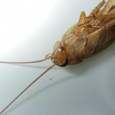 Жуки умирают на спине из-за яда