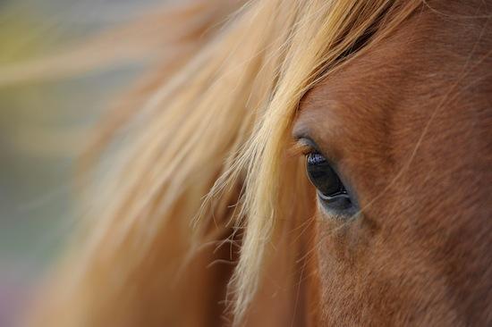 В природе большие глаза бывают только у быстрых бегунов
