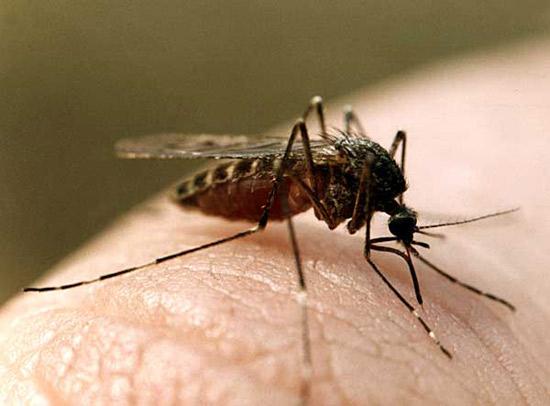 Комары кусают людей избирательно