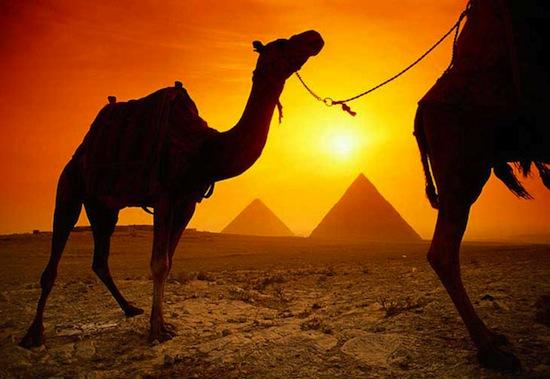 У верблюдов есть дополнительное веко — «стеклоочиститель»