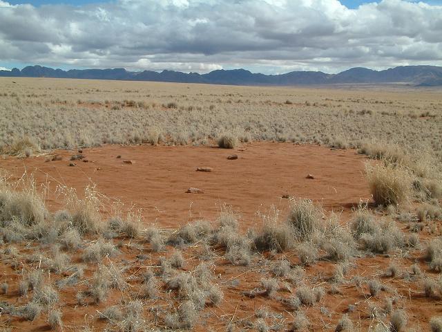 В Намибии есть «волшебные круги»