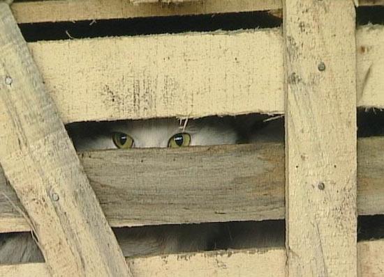 Китайцы в провинции Гуандун съедают около 10 000 кошек в день