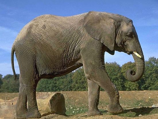 6 современных технологий, которые используются животными уже не один миллион лет