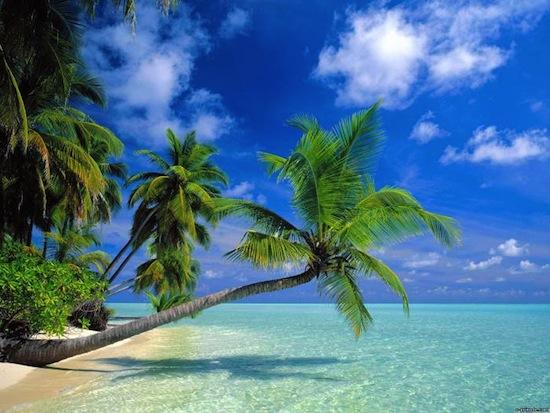 52 миллиона лет назад в Антарктиде росли пальмы