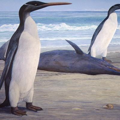 Раньше пингвины были такими же высокими, как люди