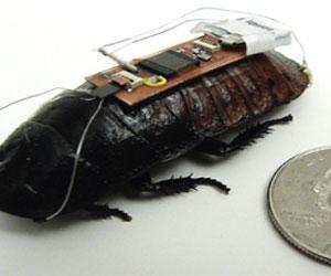 Ученые создали тараканов-киборгов