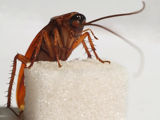 Убить таракана труднее, чем зомби