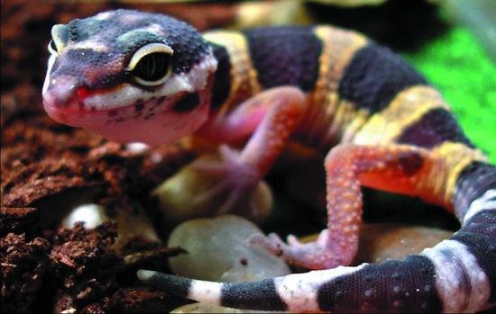 5 невероятных способов, которыми животные общаются между собой