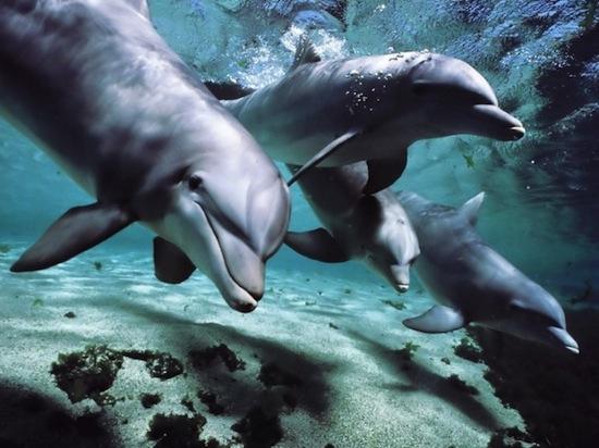 Дельфины спят только одним полушарием мозга