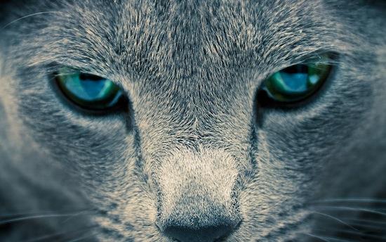 Старые кошки мяукают больше из-за старческого слабоумия