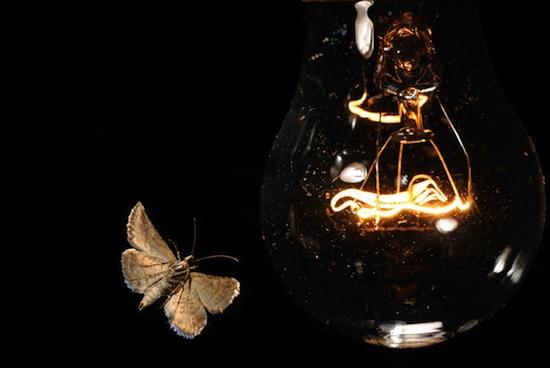 Ночные насекомые летают вокруг лампы из-за законов геометрической оптики