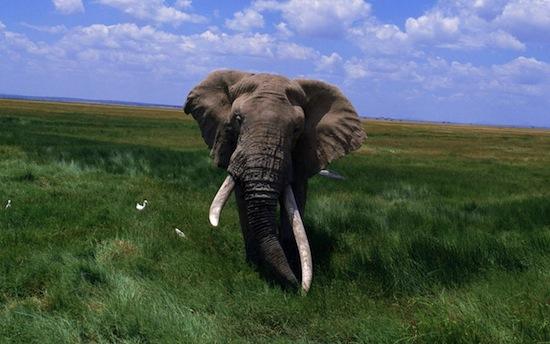7 неожиданных особенностей, которые роднят человека с животными