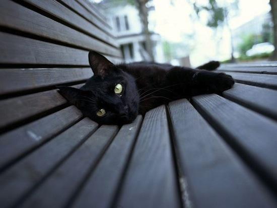 Люди не любят чёрных кошек