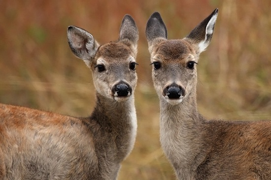 Животные, обитающие в холодном климате, имеют большие размеры тела по сравнению с живущими в тепле