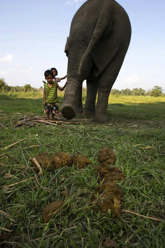 Самый дорогой кофе в мире делают из экскрементов слона