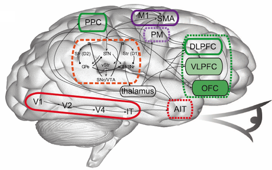 Spaun — самая реалистичная модель человеческого мозга
