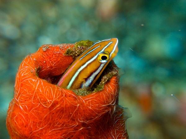 10 удивительных способов маскировки морских обитателей