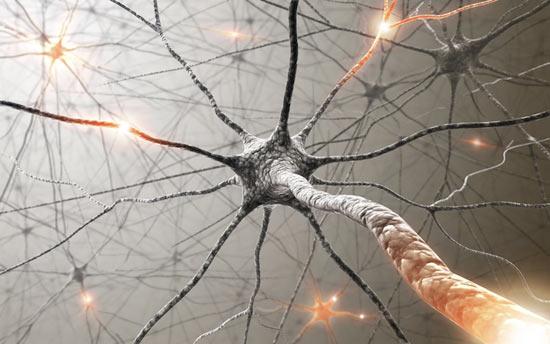Клетки головного мозга можно перепрограммировать