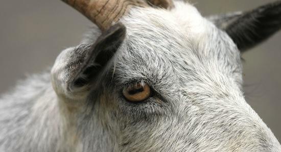 10 невероятных проявлений сексуальности у животных