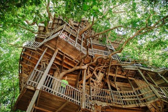 Крупнейший в мире Дом на дереве имеет площадь 930 кв м и опирается на 6 деревьев