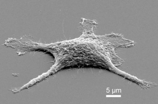 Учёные создали зомби-клетки, которые после смерти работают лучше, чем живые